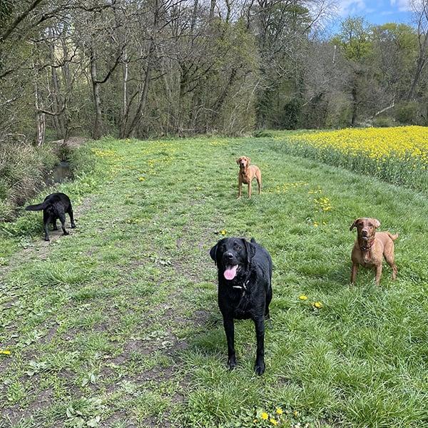 dog walker Dickens Heath Tidbury Green Earlswood