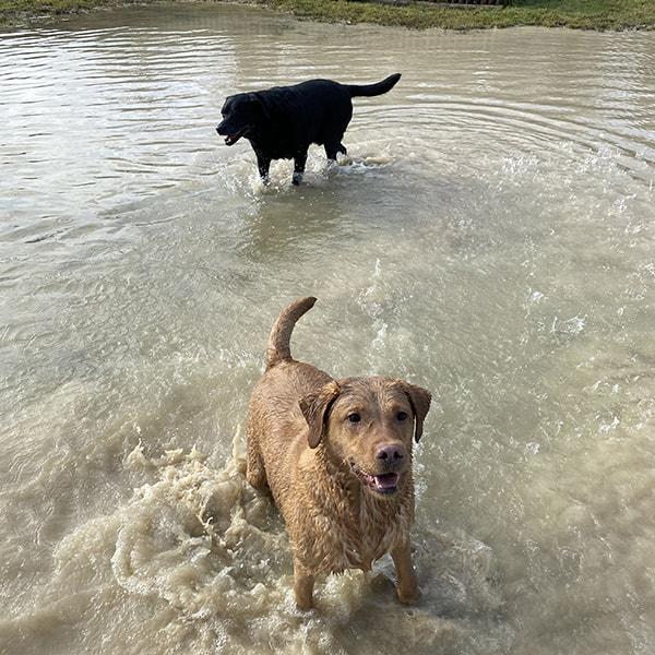 dog walker Marston Green Water Orton Dorridge