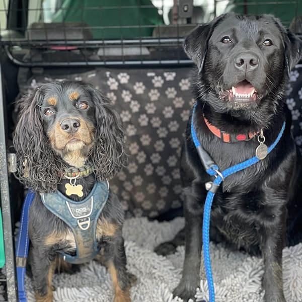 dog walker Maypole Drakes Cross
