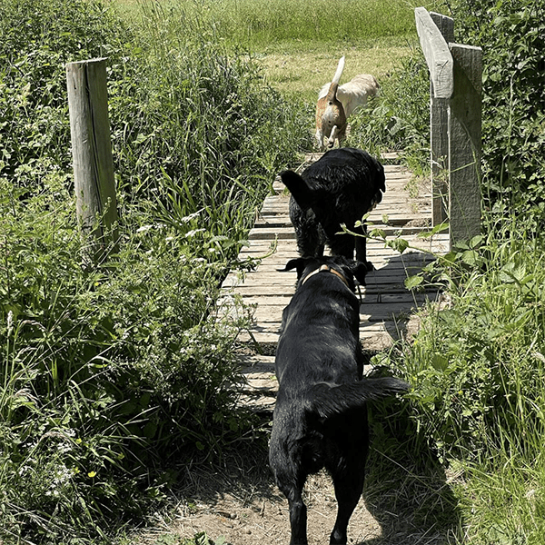 dog walking in solihull tillies tail wagging walkies